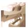 Dinolandien fossile